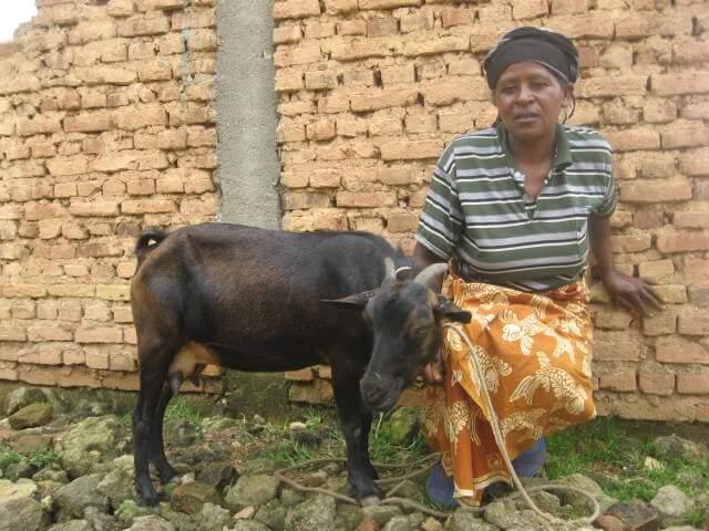bapfakurera sara avec sa chèvre