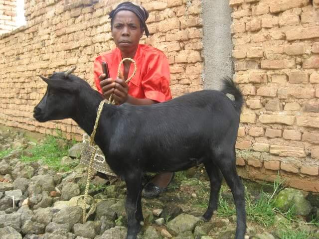 nyirakwezi concilie avec sa chèvre